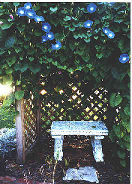 angel bench and arbor
