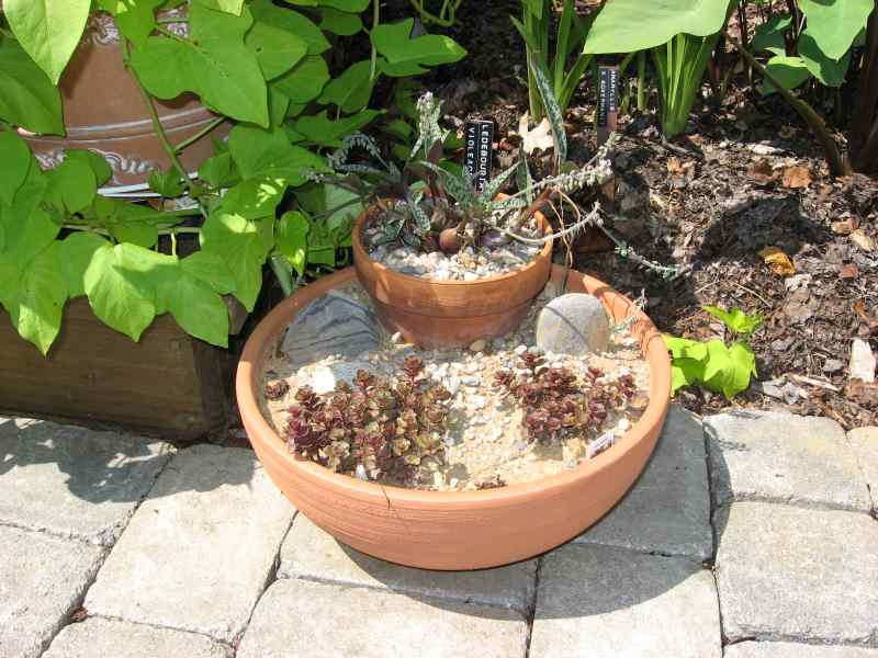Another clay bowl succulent garden