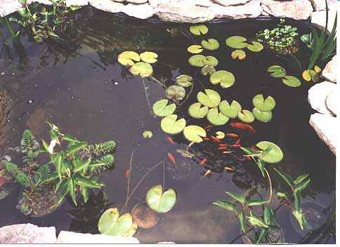 Kentucky dan 39 s pond pages a backyard oasis to forget How to build a goldfish pond
