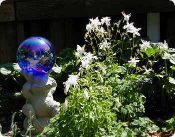 Gazing ball and Columbine