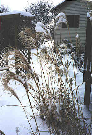Tall grass in the snow